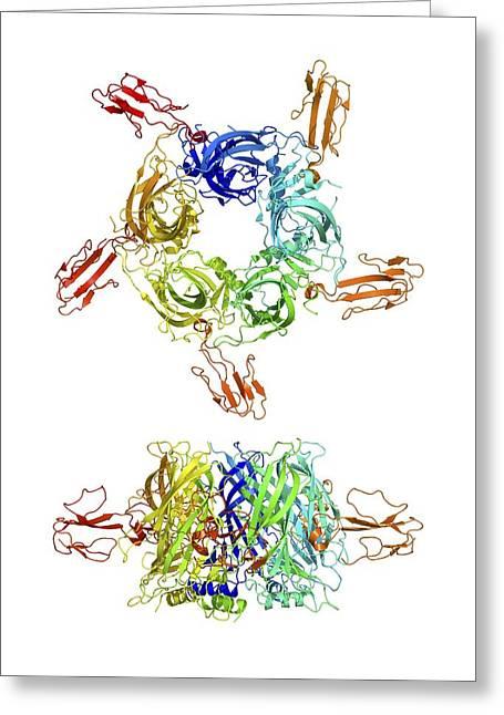 Peptide Greeting Cards - Cobra Venom Action, Molecular Model Greeting Card by Laguna Design