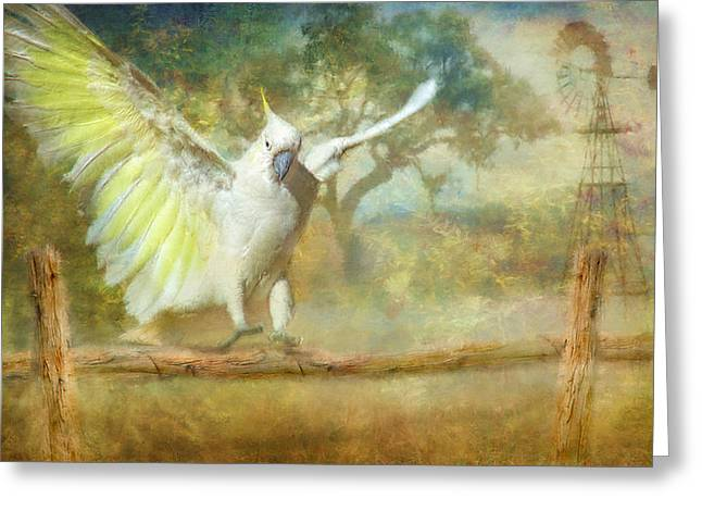 Flying Animal Greeting Cards - Cockatoo Dreaming Greeting Card by Trudi Simmonds