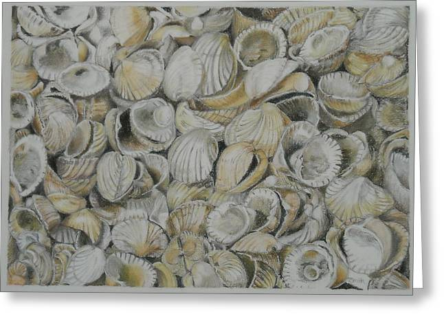 Sheds Pastels Greeting Cards - Cockle Shells Greeting Card by Teresa Smith