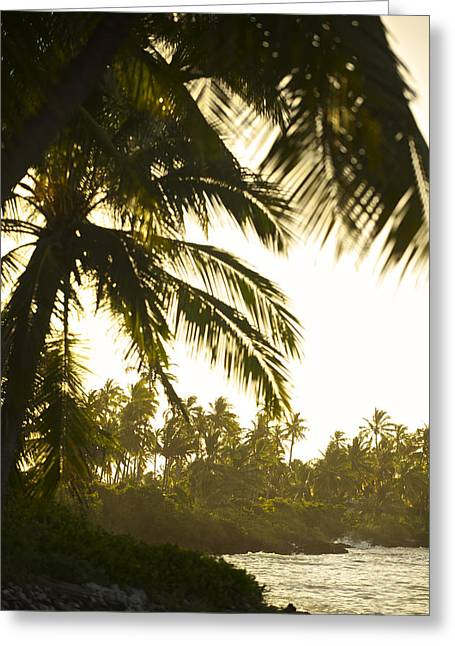 Ocean Landscape Greeting Cards - Coconut Palm Trees On The Coast Greeting Card by Jad Davenport