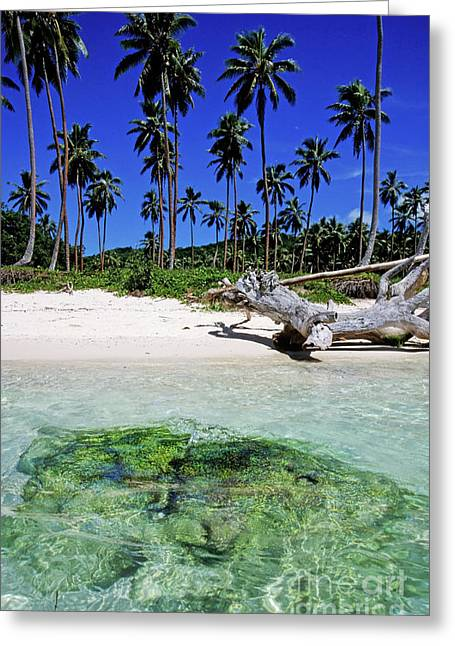 Sami Sarkis Photographs Greeting Cards - Coconut trees along Siviri Beach on the island of Efate Greeting Card by Sami Sarkis