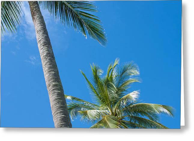 coconuts  Greeting Card by ATIKETTA SANGASAENG