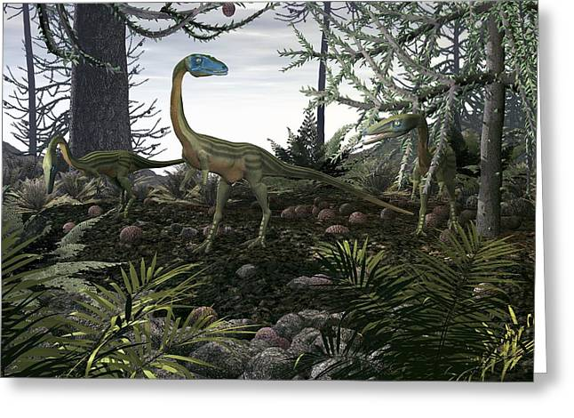 Bipedal Greeting Cards - Coelophysis Dinosaurs, Artwork Greeting Card by Walter Myers