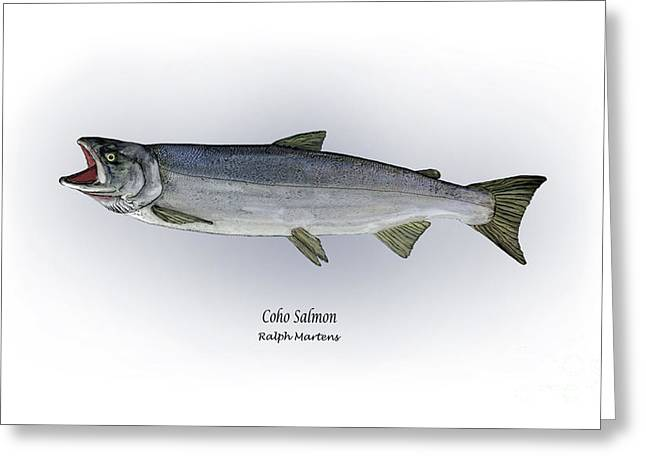 Salmon Drawings Greeting Cards - Coho Salmon Greeting Card by Ralph Martens