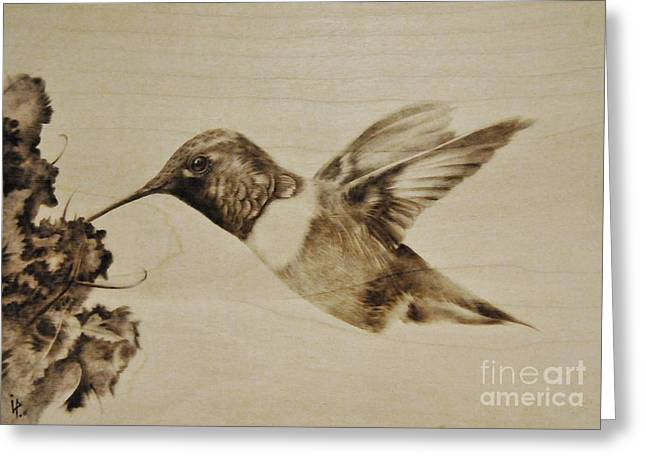 Woodburning Greeting Cards - Colibri Greeting Card by Ilaria Andreucci