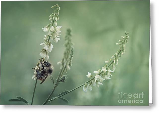 Bumblebee Greeting Cards - Collecting The Summer Greeting Card by Priska Wettstein
