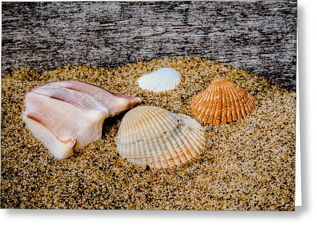 Virginia Beach Greeting Cards - Collection of Shells Greeting Card by David Hahn