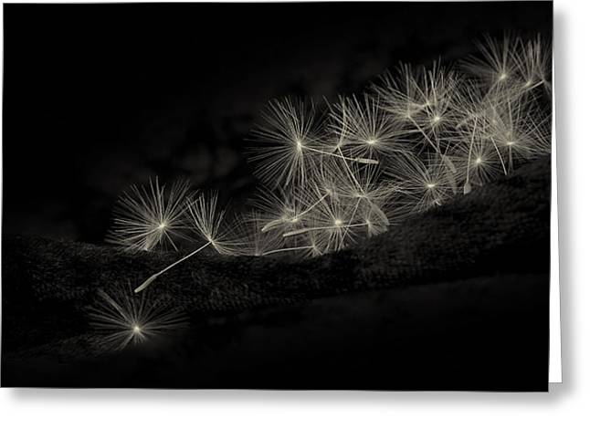Collective Greeting Cards - Collective Wishes Greeting Card by Tim Nichols