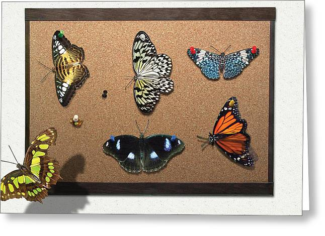 Lepidopterist Greeting Cards - Collector - Lepidopterist - My Butterfly Collection Greeting Card by Mike Savad
