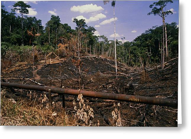 Deforestation Greeting Cards - Colonisation Of The Amazonian Rainforest Greeting Card by Dr Morley Read