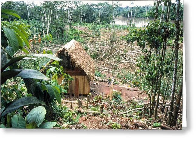 Deforestation Greeting Cards - Colonists Clearing Rainforest By Ecuadorian Amazon Greeting Card by Dr Morley Read