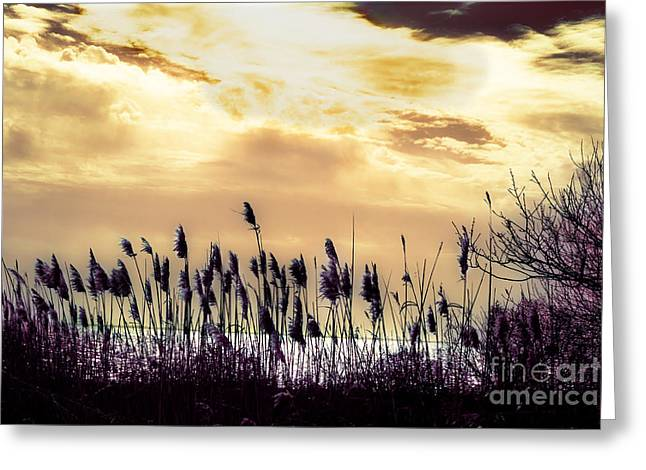 York Beach Greeting Cards - Color Infrared Beach Greeting Card by Angela Rose