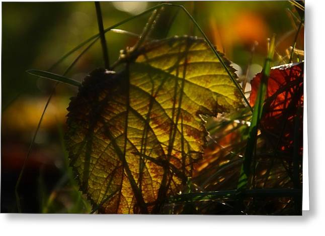 Ground Level Photographs Greeting Cards - Color Jungle Greeting Card by Odd Jeppesen