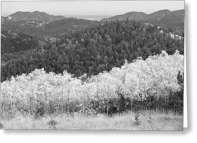 Framed. Giclee Greeting Cards - Colorado Aspen View Looking Out BW Greeting Card by James BO  Insogna