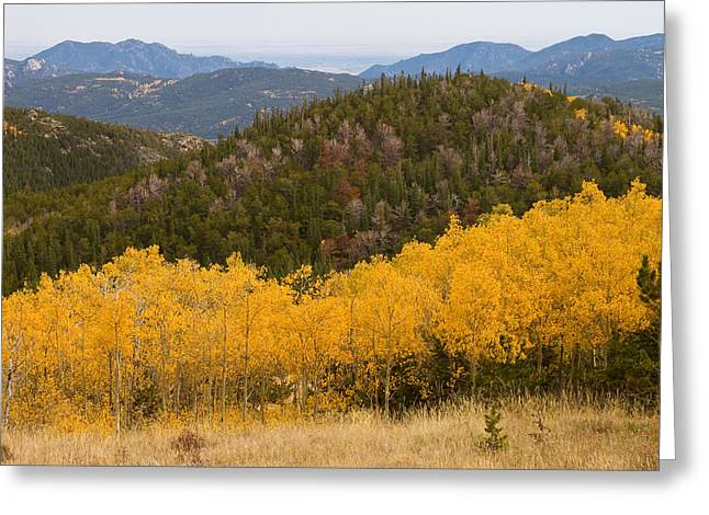 Gold Framed Prints Greeting Cards - Colorado Aspen View Looking Out Greeting Card by James BO  Insogna