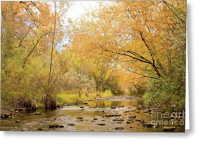 Gold Framed Prints Greeting Cards - Colorado Autumn Creek Greeting Card by James BO  Insogna