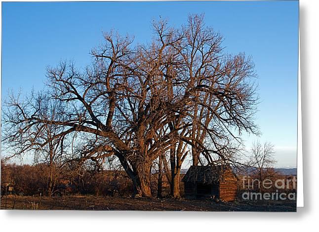 Old Cabins Greeting Cards - Colorado Cabin and Barren Tree at Sunset Greeting Card by ELITE IMAGE photography By Chad McDermott