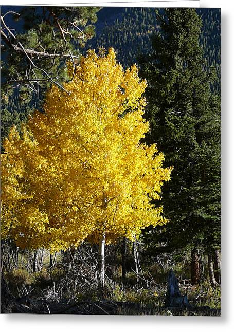 Rocky Mountain National Park Greeting Cards Greeting Cards - Colorado Gold Greeting Card by Debbie Poetsch