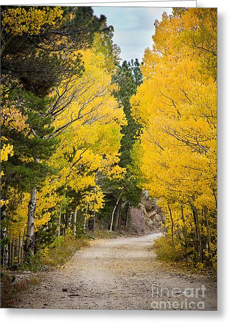 Colorado Rocky Mountain Aspen Road Portrait  Greeting Card by James BO  Insogna