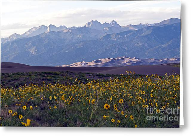 Cristo Greeting Cards - Colorado Style Landscape Sunflowers on the Sangre de Cristos Greeting Card by Scotts Scapes