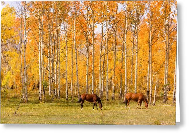 Striking Images Greeting Cards - Colorful Autumn High Country Landscape Greeting Card by James BO  Insogna
