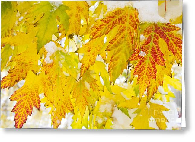 Snow Tree Prints Greeting Cards - Colorful Autumn Leaves and Snow Greeting Card by James BO  Insogna