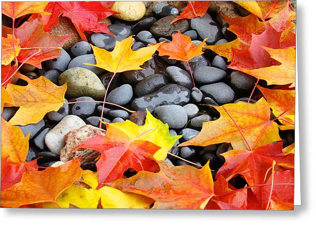 Colorful Autumn Leaves Prints Rocks Greeting Card by Baslee Troutman