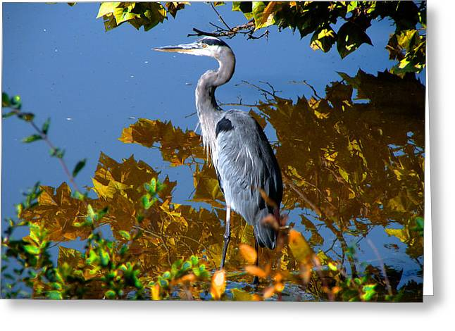 Bird Rookery Swamp Greeting Cards - Colorful Greeting Card by Brian Stevens