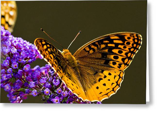 Bug Framed Prints Greeting Cards - Colorful Butterfly Greeting Card by Lori Coleman