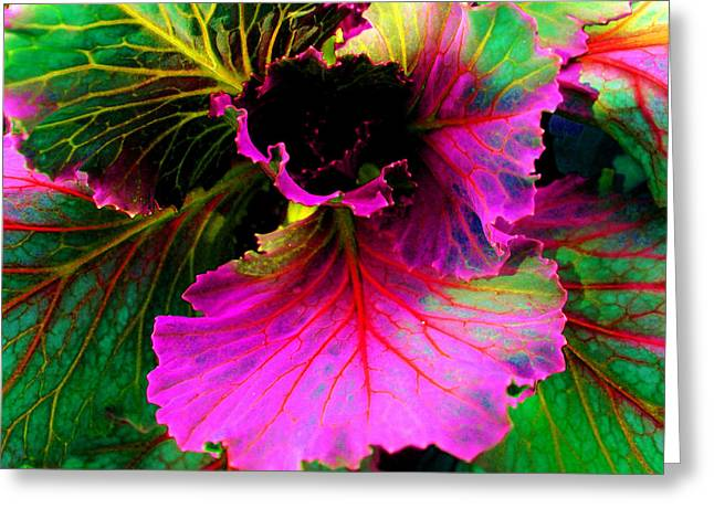 Laura Grisham Greeting Cards - Colorful Cabbage Greeting Card by Laura  Grisham
