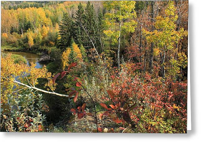 Fall Scenes Greeting Cards - Colorful Canadian Autumn Greeting Card by Jim Sauchyn