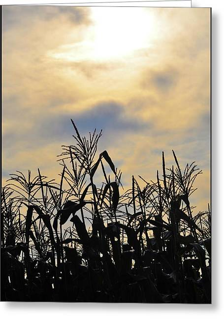 Cornfield Greeting Cards - Colorful Clouds Over a Cornfield Greeting Card by Bill Cannon