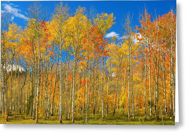 Striking-photography.com Greeting Cards - Colorful Colorado Autumn Landscape Greeting Card by James BO  Insogna