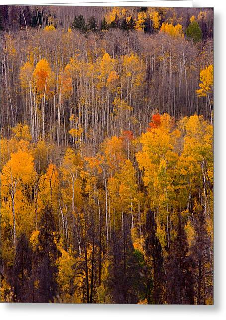 Striking Images Greeting Cards - Colorful Colorado Autumn Landscape Vertical Image Greeting Card by James BO  Insogna