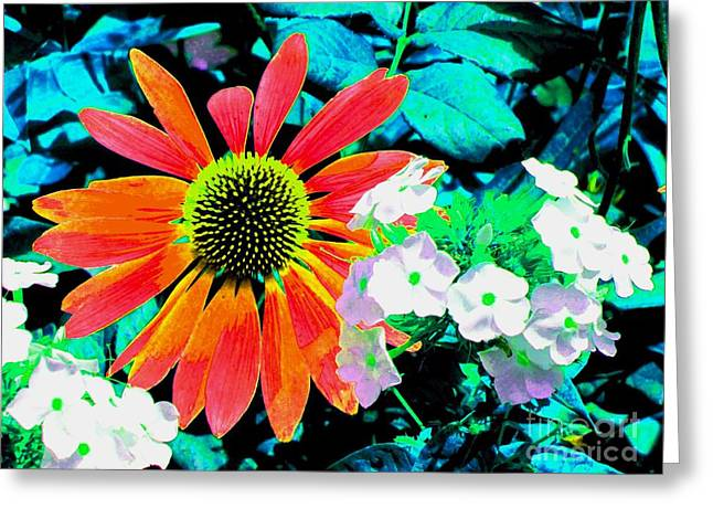 Seacape Greeting Cards - Colorful Echinacea Purpurea Greeting Card by Annie Zeno