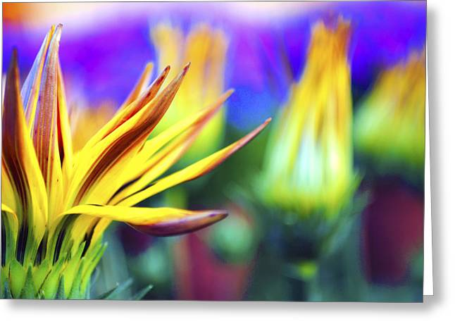 Colorful Flowers Greeting Card by Sumit Mehndiratta