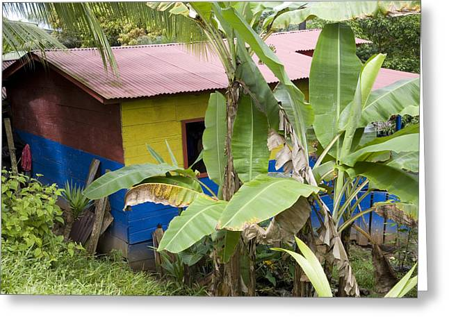El Castillo Greeting Cards - Colorful Home In The Nicaraguan Town Greeting Card by David Evans