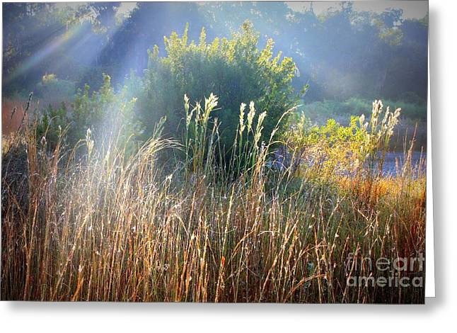 Morass Greeting Cards - Colorful Morning Marsh Greeting Card by Carol Groenen