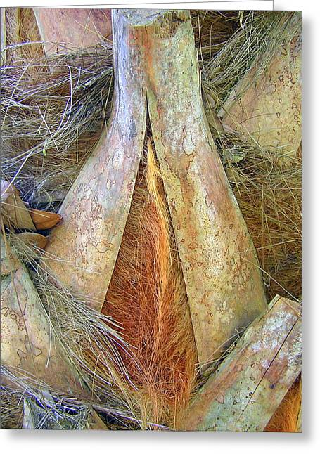 Oscar Scherer State Park Greeting Cards - Colorful palm tree trunk abstract Greeting Card by John Myers
