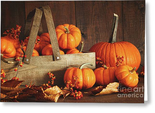 Various Greeting Cards - Colorful pumpkins with wood background Greeting Card by Sandra Cunningham