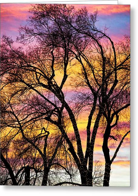 Sunrise Greeting Cards - Colorful Silhouetted Trees 13 Greeting Card by James BO  Insogna