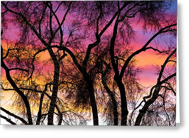 Colorful Silhouetted Trees 27 Greeting Card by James BO  Insogna