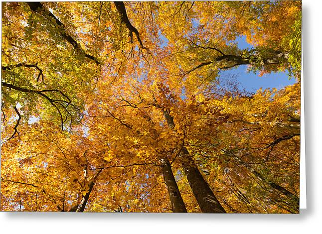 Herbst Greeting Cards - Colorful trees in fall Greeting Card by Matthias Hauser