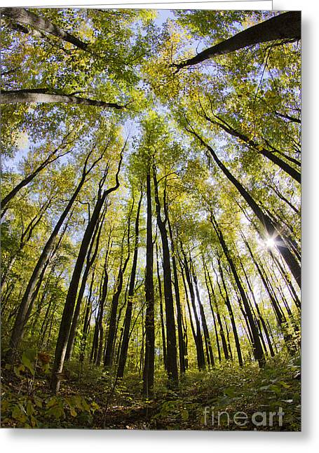 Shenandoah National Park Greeting Cards - Colorful Trees in Shenandoah National Park Greeting Card by Dustin K Ryan