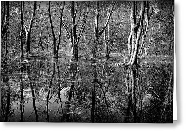 Colorless Serenity Greeting Card by Greg Palmer