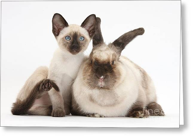 Colorpoint Rabbit And Siamese Kitten Greeting Card by Mark Taylor