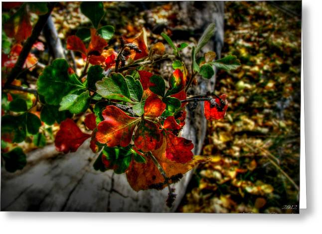 Prescott Greeting Cards - Colors Above the Ground Greeting Card by Aaron Burrows