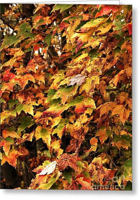 Photos Of Autumn Greeting Cards - Colors of Autumn Greeting Card by John Rizzuto