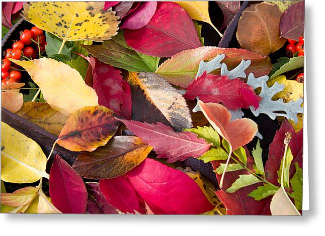 Colors Of Autumn Greeting Card by Shane Bechler