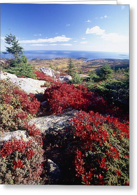 Red Granite Greeting Cards - Colors of Cadillac Mountain Greeting Card by George Oze
